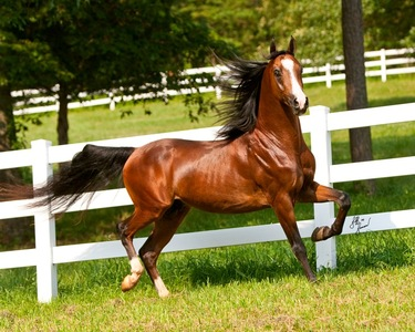 arabian horse farm listings