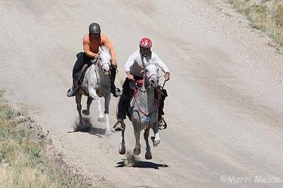 Photo Credit Merri Melde<br> Riders Christoph Schork on Arabian Stars Aflame (Flaming<br>  Tigre x Samda Star by Samstar+/) and Dennis Summers<br> riding another Arabian fondly called Hey Soul Sister (Flaming<br> Streak x Faras Keepsake by Atmandu) racing to the 50 Mile<br> AERC Champion finish line.
