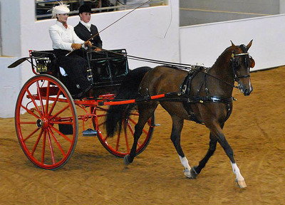 Half-Arabian sport horse Riften, owned by Wendy<br> and Mike Gruskiewicz, won five 2015 Region 14<br> Championships